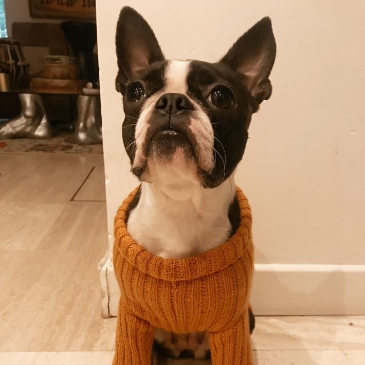 Modèle tricot PDF - Pull Nouba pour chiens