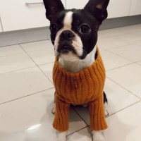 French Pattern Dog Sweater Nouba
